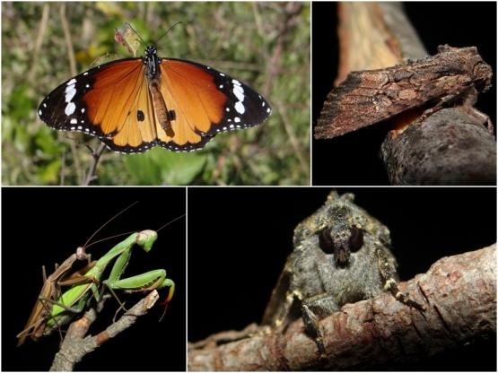 leptiri tijekom izlaska upoznavanje mišića